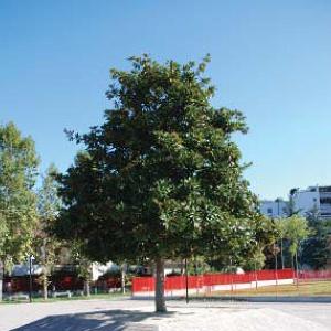 Riqualificazione Parco Pubblico Valleambrosia e strade limitrofe